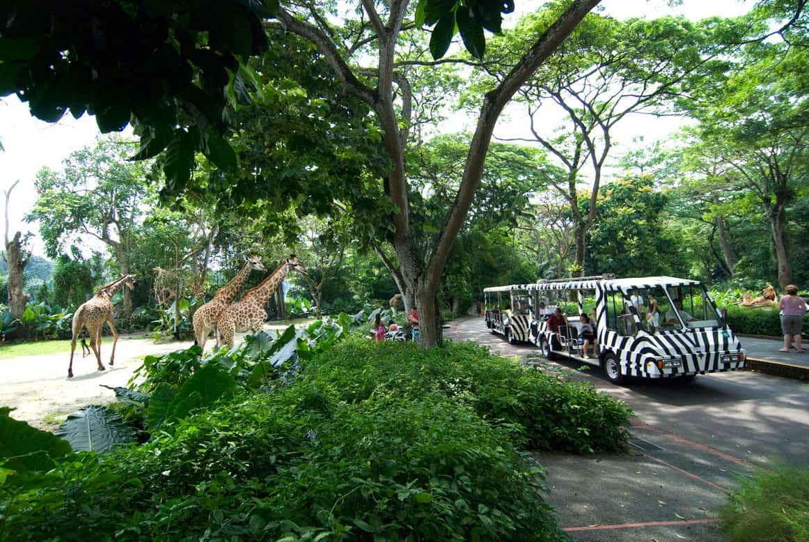 Singapore zoo ticket price entrance fee opening hours for How much does a hillside tram cost