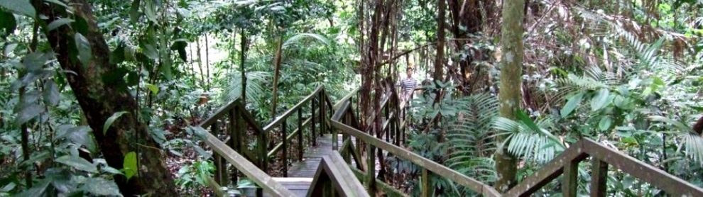 MacRitchie Nature Trail