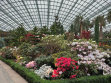 Flower Dome 41