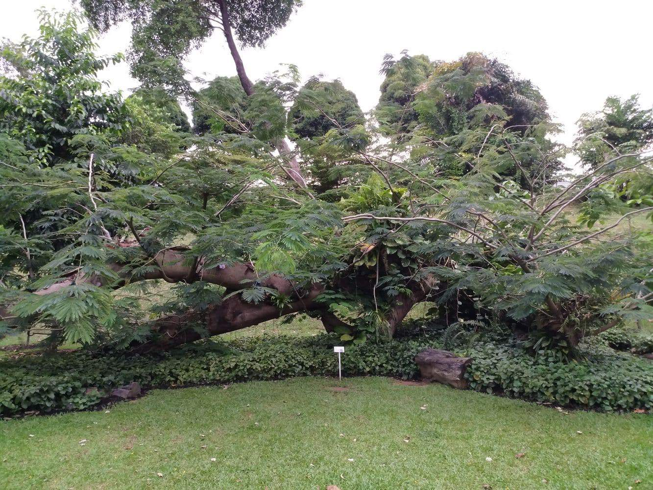 Fort Canning Park 00014