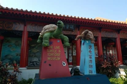 The Live Turtle & Tortoise Museum-05