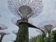 Gardens by the Bay 38