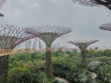 Gardens by the Bay 48