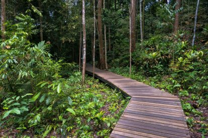 MacRitchie Nature Trail 01