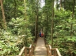 MacRitchie Nature Trail 02