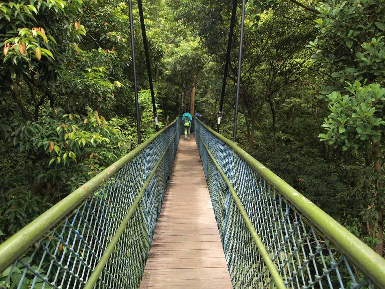 MacRitchie Nature Trail 03