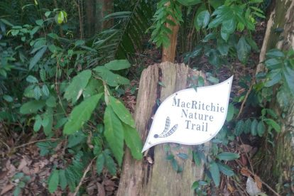 MacRitchie Nature Trail-09