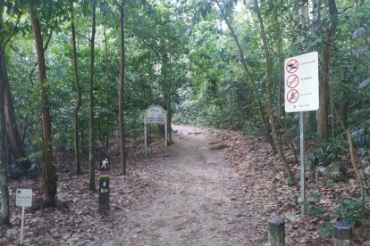 MacRitchie Nature Trail-10