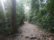 MacRitchie Nature Trail-12