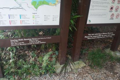 MacRitchie Nature Trail-14