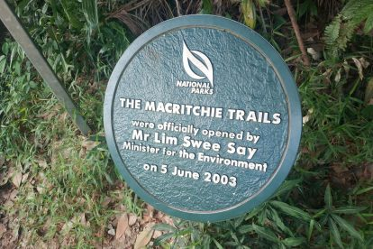 MacRitchie Nature Trail-15