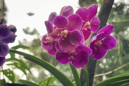 National Orchid Garden 01