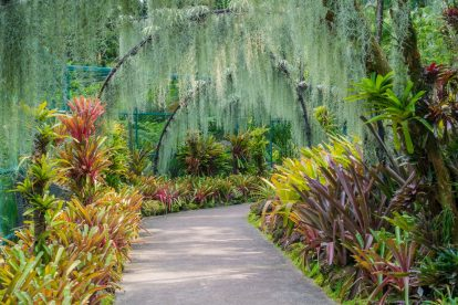 National Orchid Garden 02