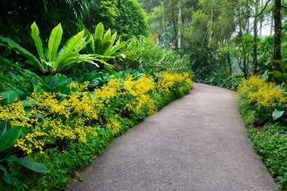 National Orchid Garden 06