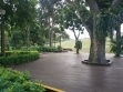 MacRitchie Reservoir-04