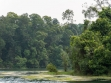 MacRitchie Reservoir 07