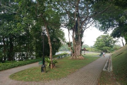MacRitchie Reservoir-18